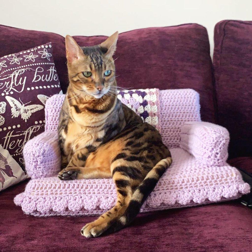 Вязание как хобби. Кошка на диванчике.